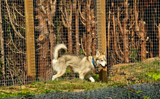 Fencing mesh to keep in an escape artist!